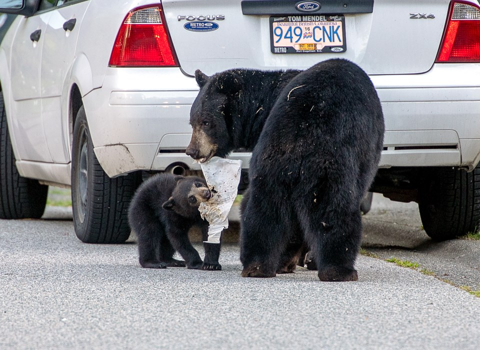 Bears root through trash in the Heritage Mountain neighbourhood