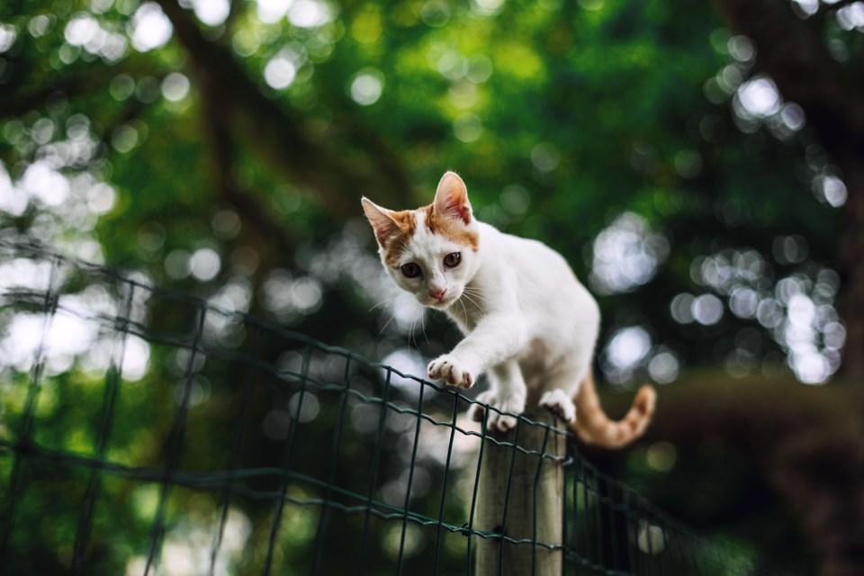 cat on a fence, unsplash