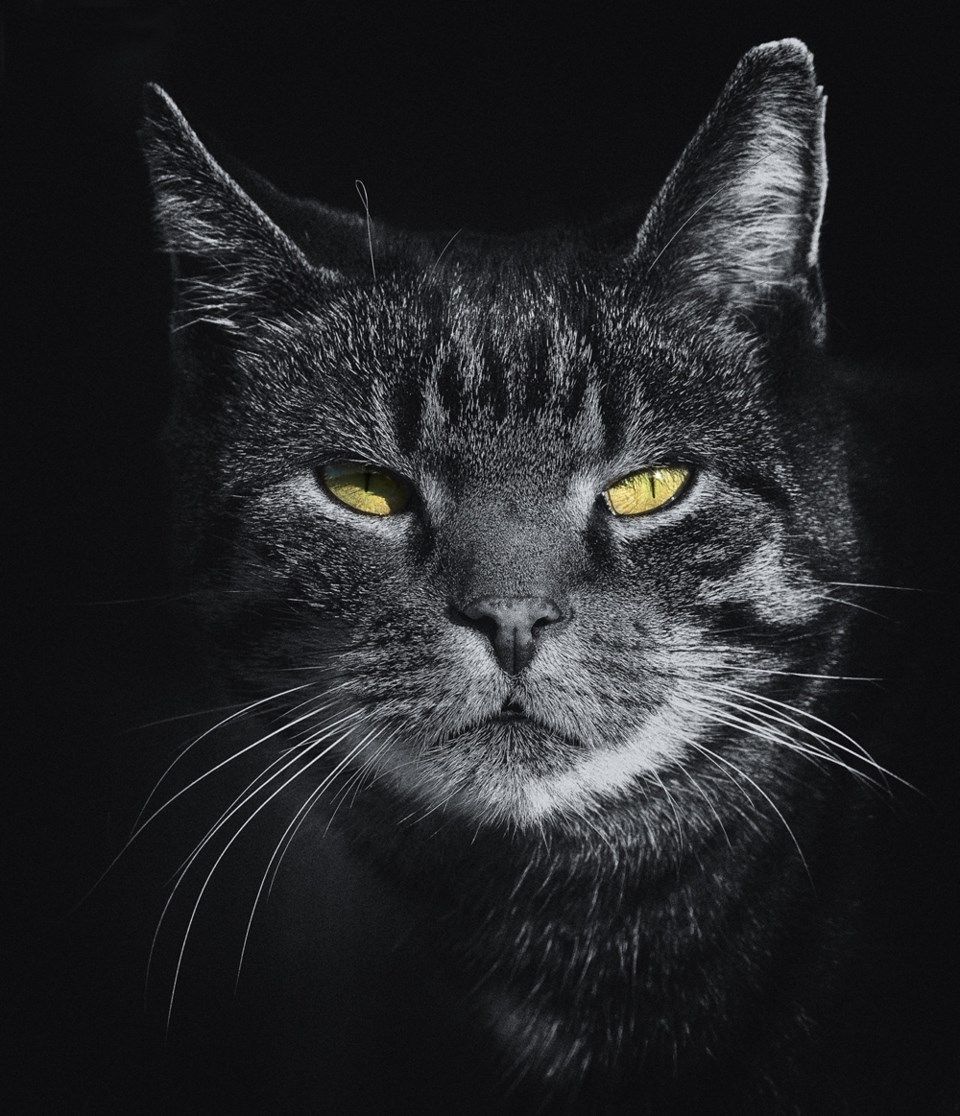 resting cat face, stock photo