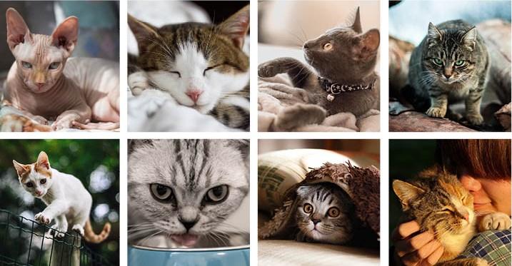 cats, stock photos