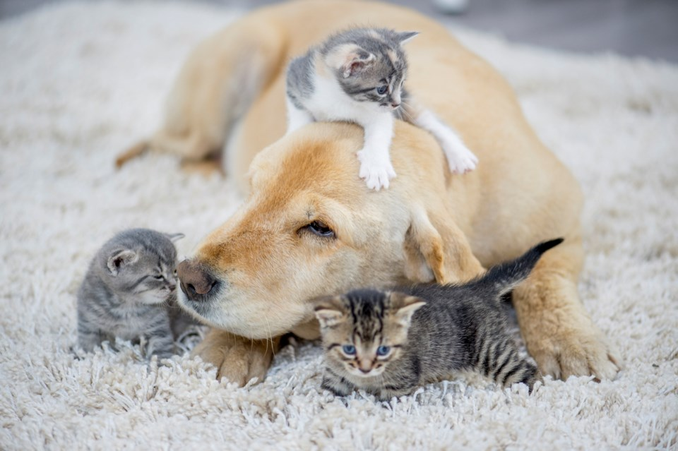 Dogs and cats have their day at a new Science World exhibition. Photo iStock