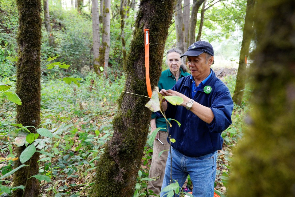 John Yu and Virginia Ayers, members of New Westminster Environmental Partners, counted and measured trees in an area that could be impacted by the Trans Mountain pipeline expansion project.