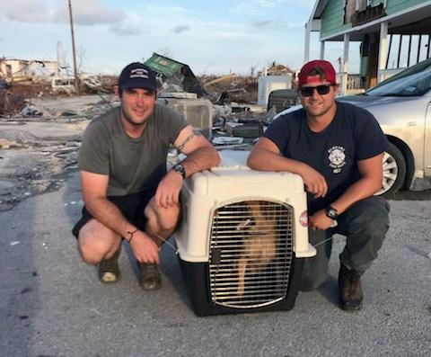 Bahamas dogs