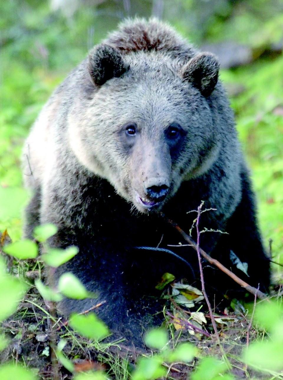 Grizzly-bear-workshop.03_10.jpg