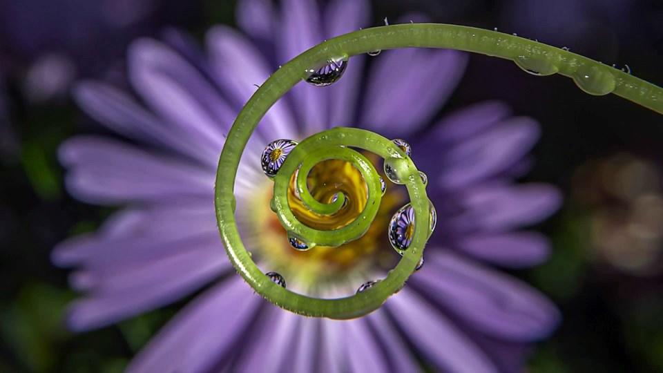 """Daisy Chain"" by Nancie Green"