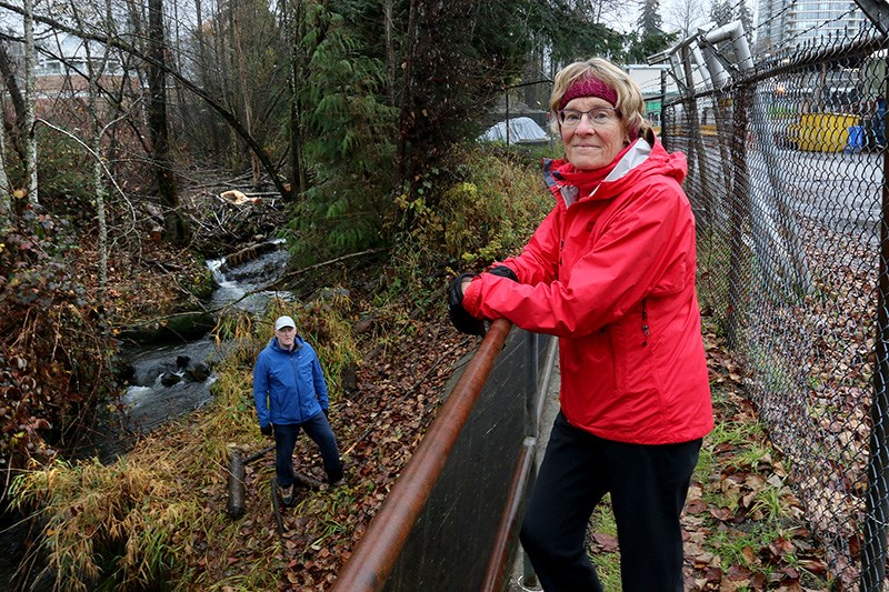 Judy Taylor-Atkinson, and her husband, Jim Atkinson, check out Port Moody's Suter Brook creek, behind the public works yard, where a beaver colony has built a dam to create a new home. On Tuesday, city council endorsed a management plan that emphasizes co-existence with the industrious rodents.