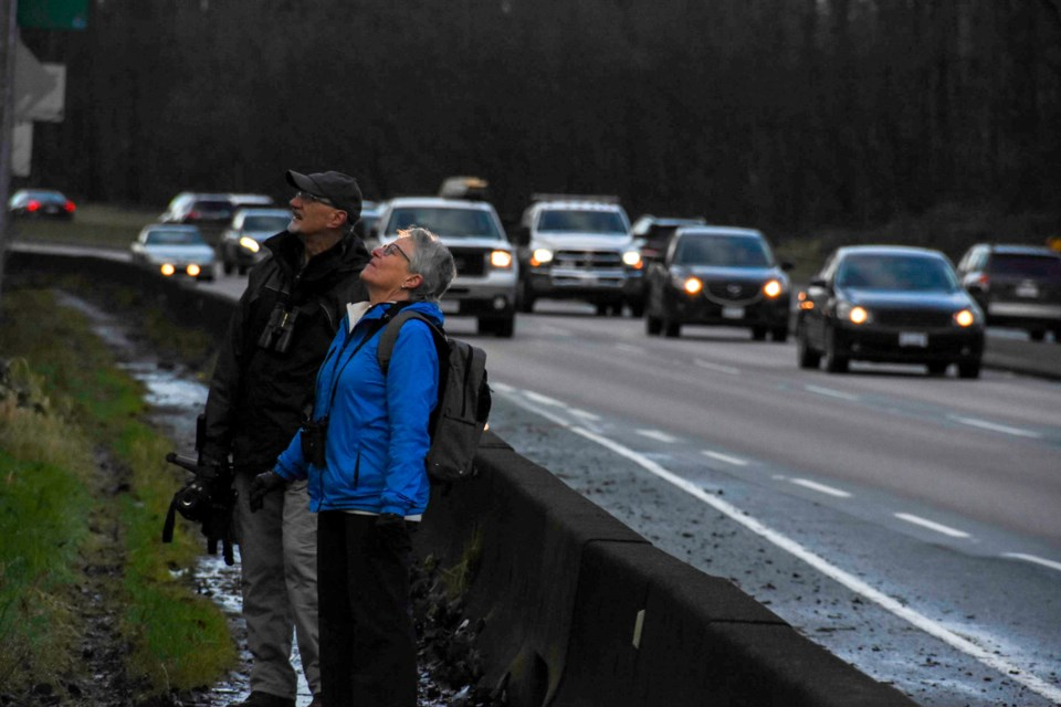 Two members of the Burke Mountain Naturalists count birds along Mary Hill Bypass during the 2020 Chr