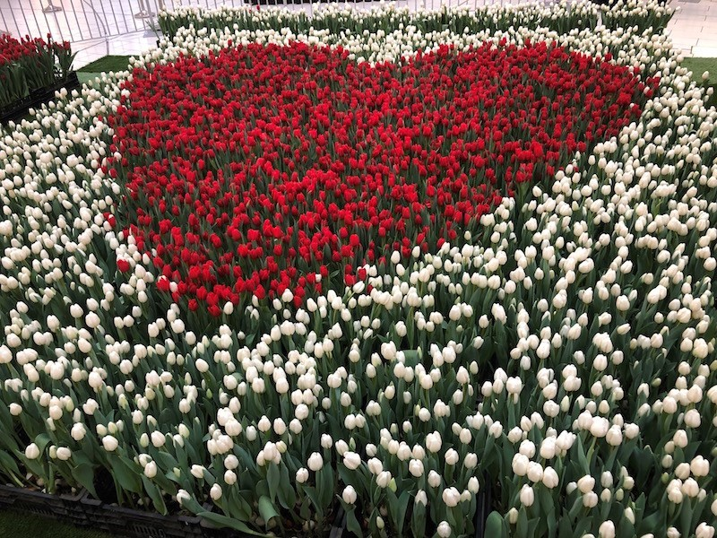 The big heart display from I Heart Tulips 2019. Photo by Lindsay William-Ross/Vancouver Is Awesome