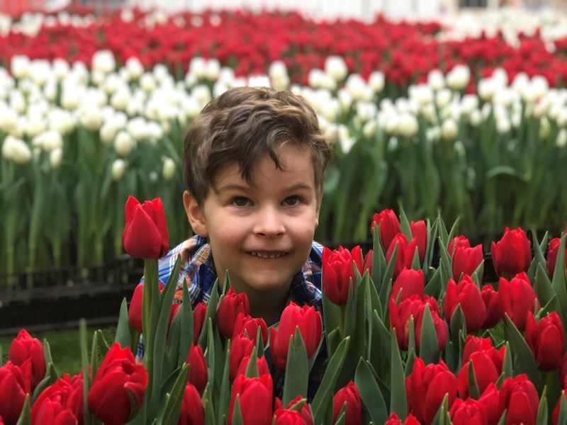 A whopping 14,000 live tulips will be on display at the I Heart Tulips event, but they'll only be th