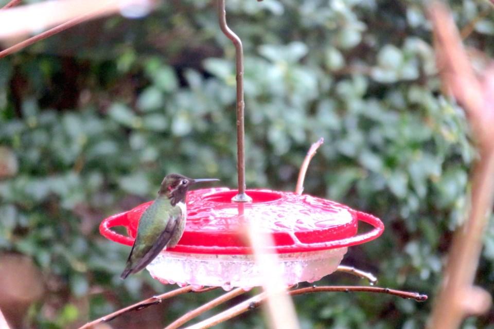 Birds getting a head start on Valentine's Day_0
