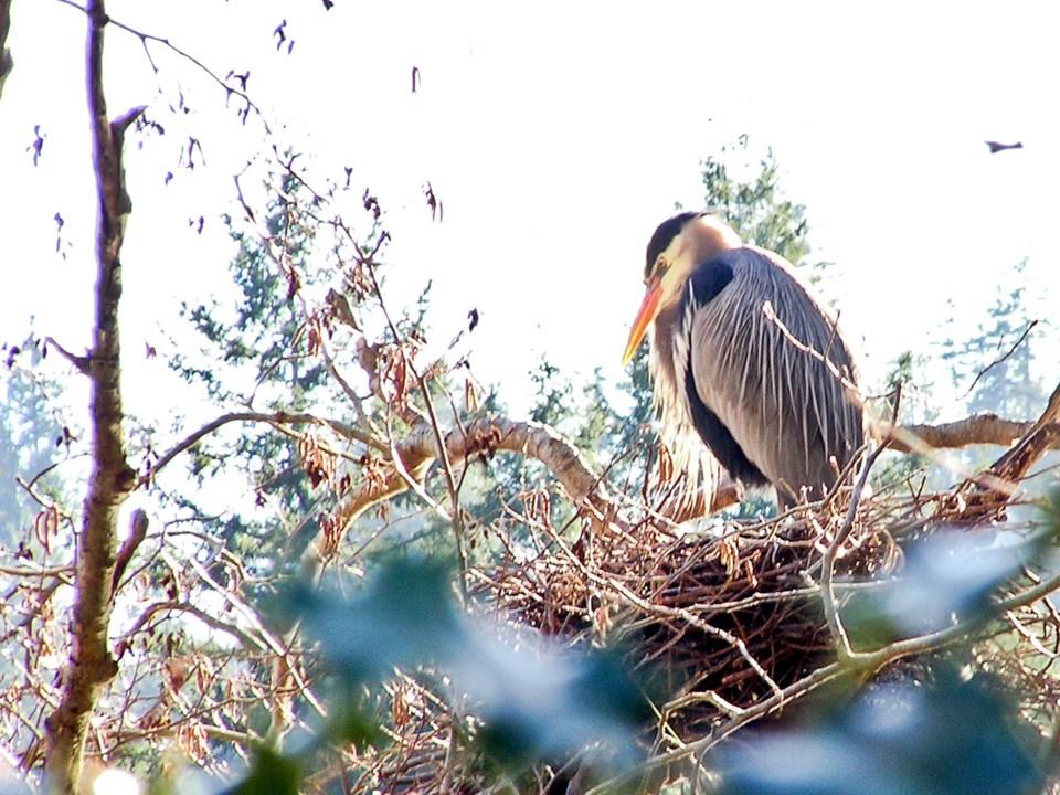 Birds getting a head start on Valentine's Day_1