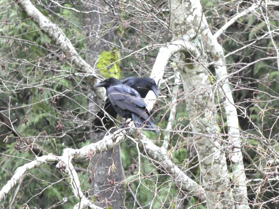 Birds getting a head start on Valentine's Day_2
