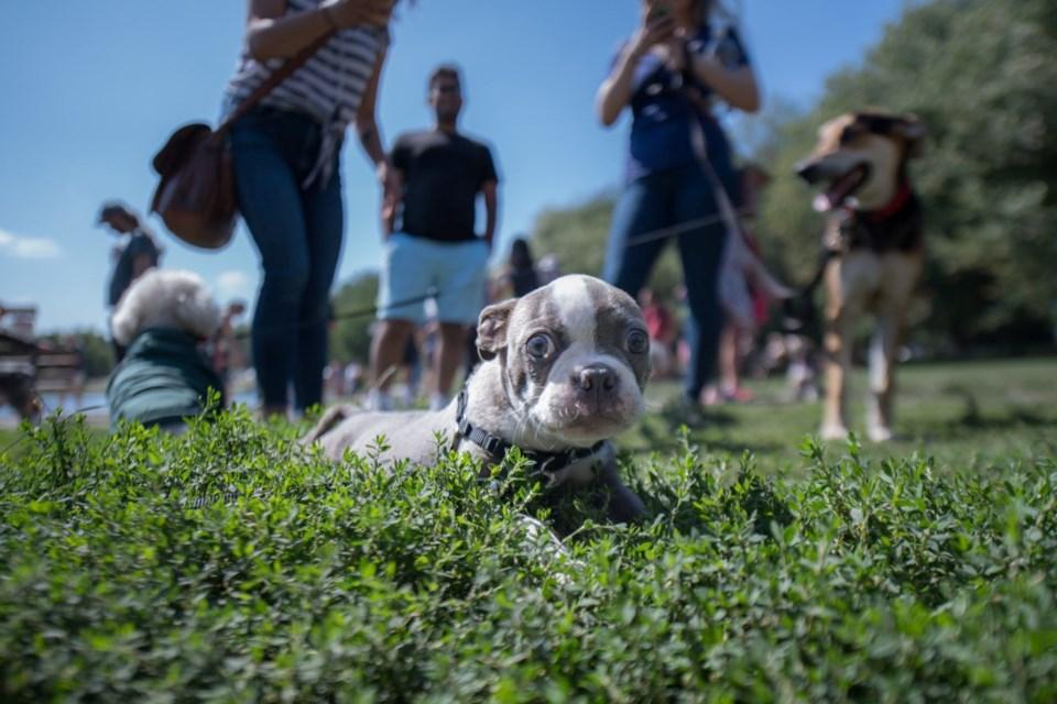 Photo Dogs of Vancity/Facebook