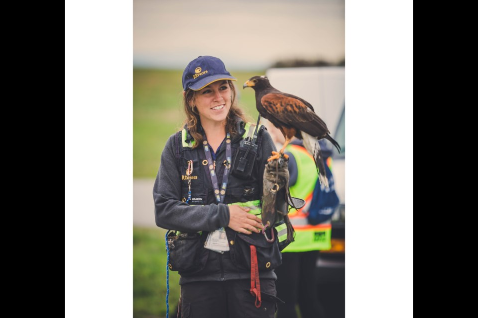 YVR's falconry program, part of the airport's wildlife management program, currently works with six falcons, three hawks and one bald eagle to help move birds away from the airfield.
