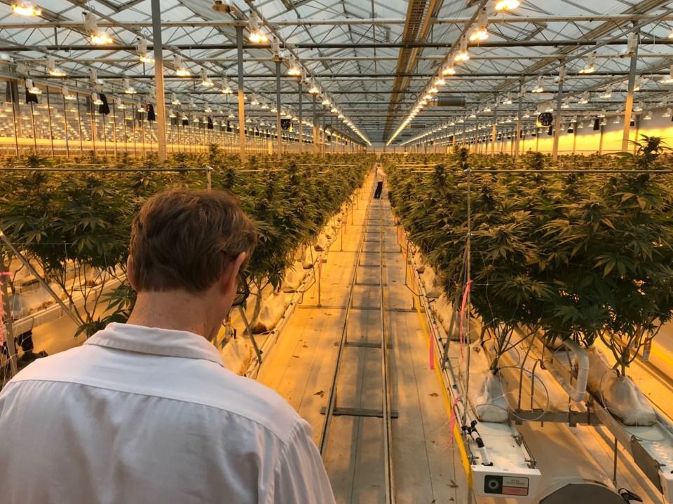 delta cannabis grower