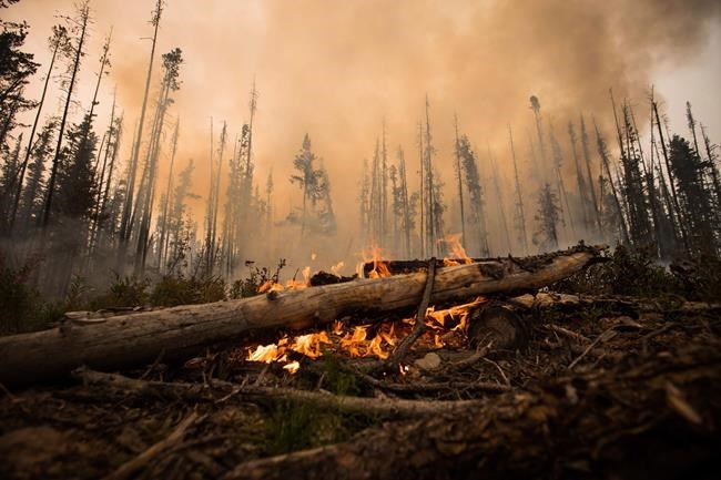 A wildfire burns on a logging road approximately 20 km southwest of Fort St. James, B.C., Wednesday, Aug. 15, 2018. THE CANADIAN PRESS/Darryl Dyck
