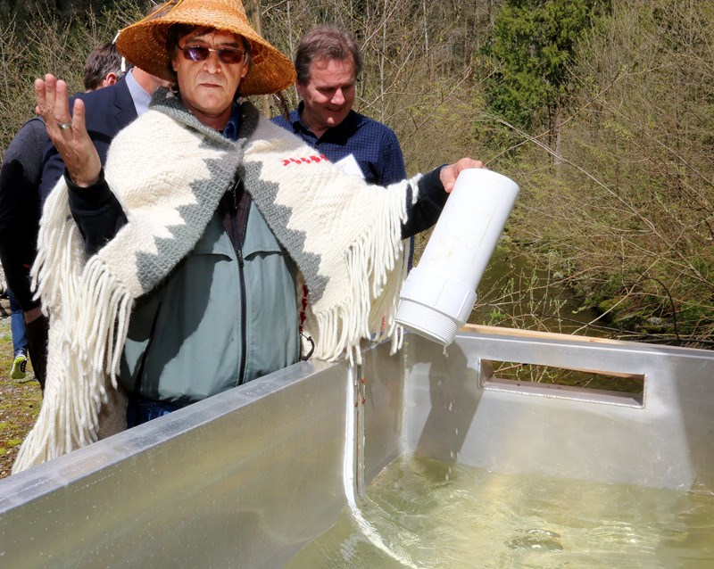 "Kwikwetlem First Nations councillor Fred Hulbert Sr. releases the ""plug"" in the trough to allow the Coquitlam salmon smolts to escape into their natural ancestral habitat of the Coquitlam River during a sockeye salmon release. Those salmon haven't yet returned but a wild sockeye was recently spotted in a trap at the Coquitlam Dam."