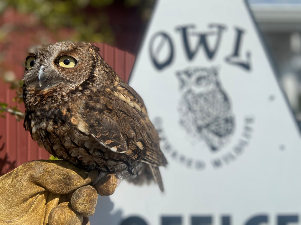 Owl re-opens