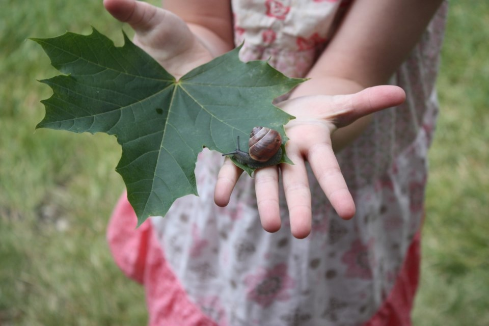A summer camp participant displays snail, one of several species children interact with at the camp.