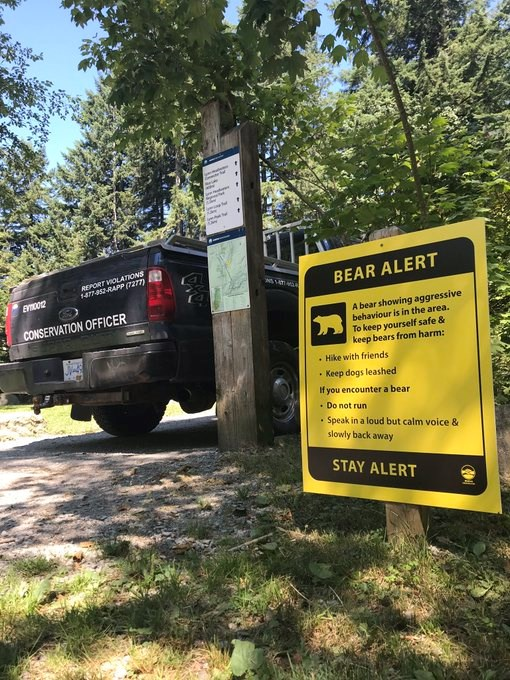bear search halted