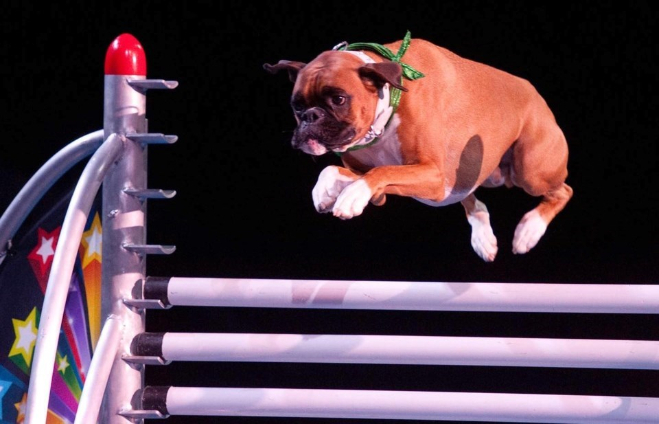 Yes, you will see SuperDogs at the 2020 PNE Fair 'Drive-Thru'