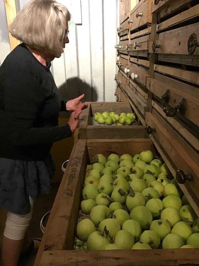 Drawers of apples in the van Berckel root cellar