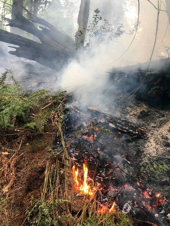 Burnaby Mountain wildfire