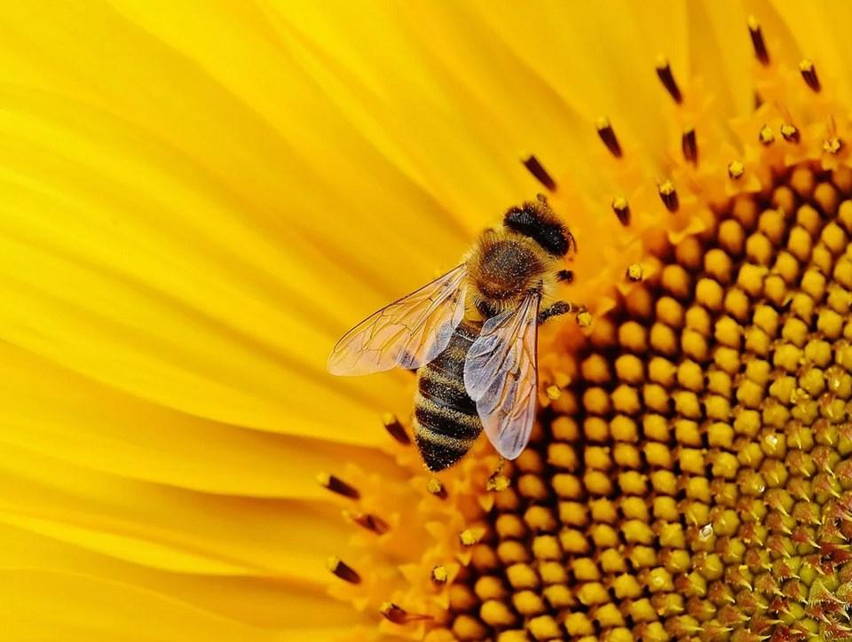 delta bee city