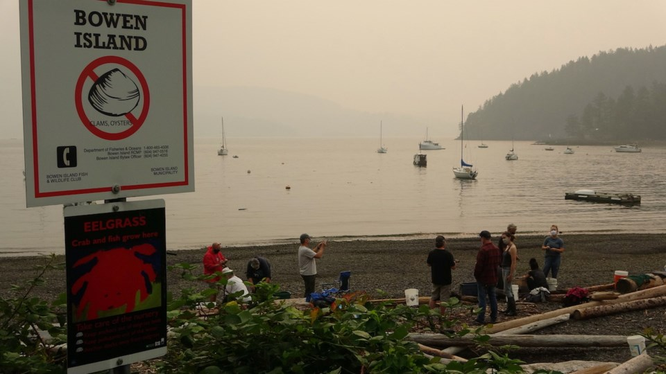 A smokey landscape as folks prepare eelgrass for transplant