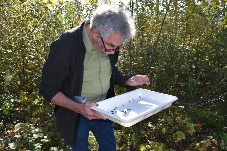 """Robert McGregor, the executive director of the Douglas College Institute of Urban Ecology (IUE), said learning more about the insect will help scientists determine whether it is """"friend or foe — or both."""""""