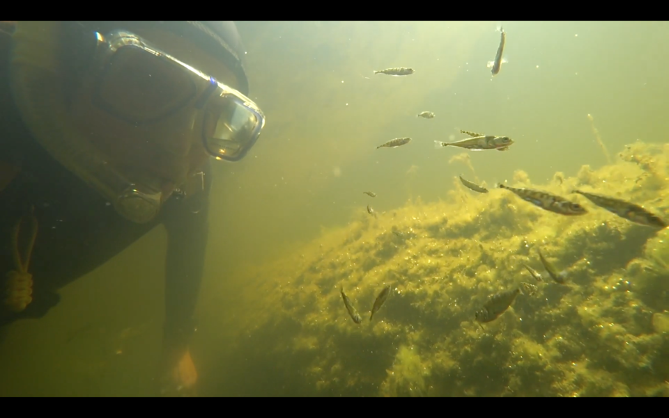 Scuba diver's face under water with fish teeming around