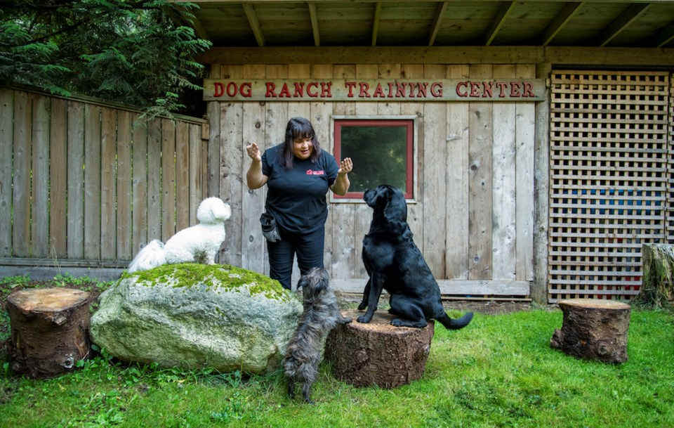Carey Bolduc with three dogs focussed on her