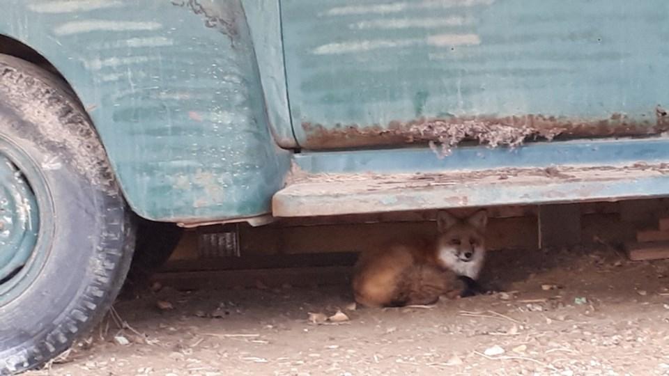fox-fsj-museum