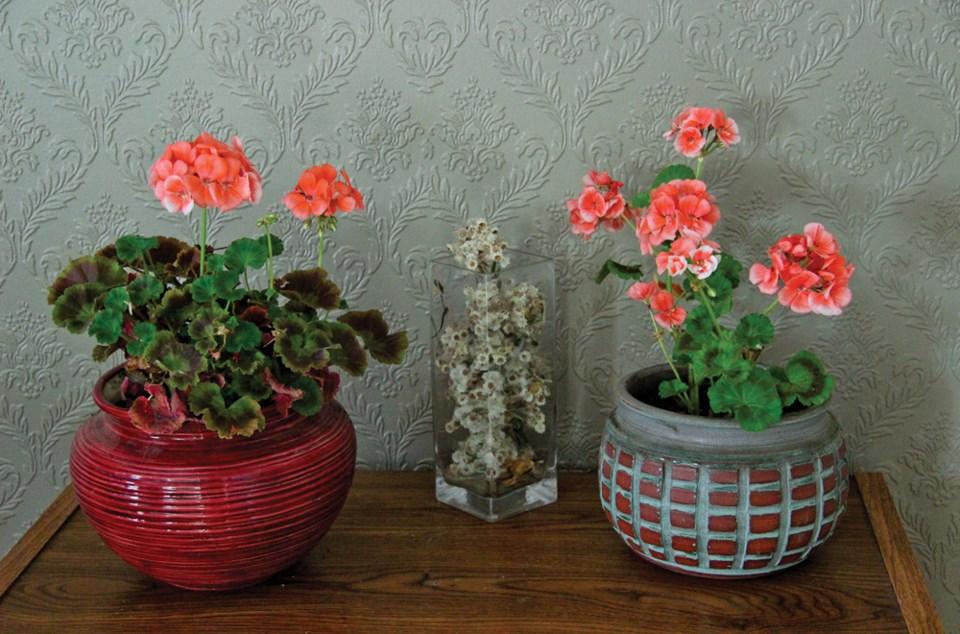 mcbeth-geraniums