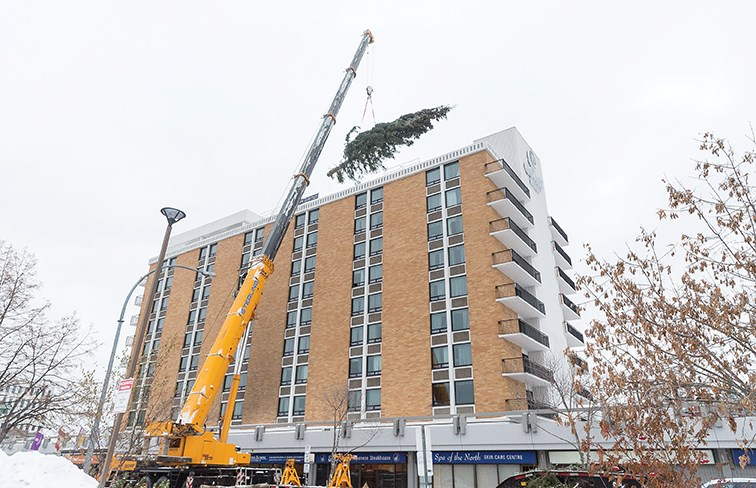 Citizen Photo by James Doyle/Local Journalism Initiative. A crane lifts a 70-foot tree on to the roof of the Coast Prince George Hotel by APA on Friday morning. The tree will be the centrepiece of the United Way of Northern B.C.'s Tree of Lights campaign.