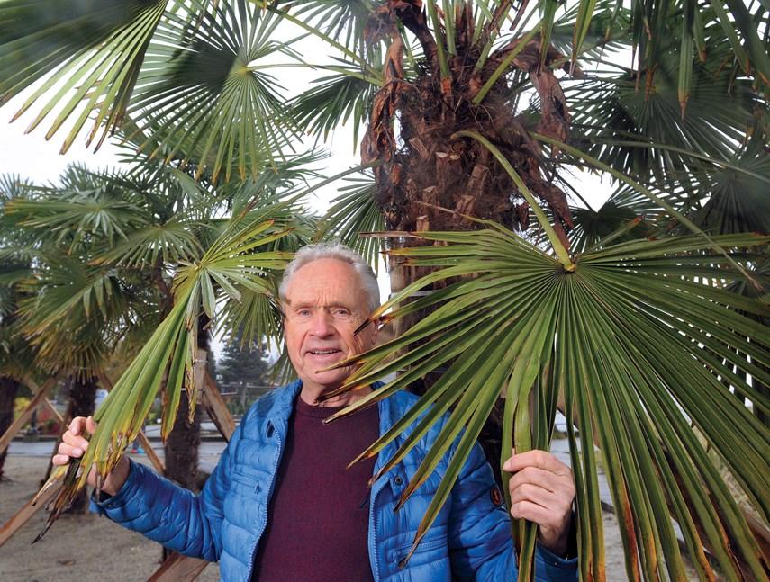 palm trees pinkowski