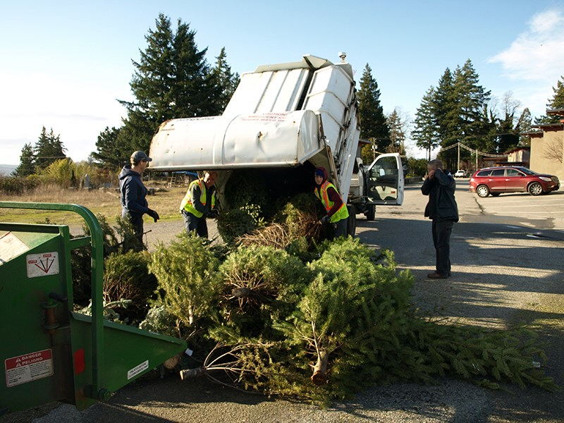 Special Olympics BC-Powell River Tree Mulch
