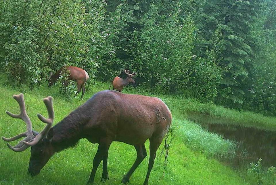 elk-southpeace