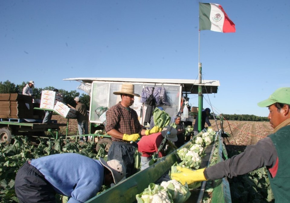 COVID-19 travel restrictions keep most foreign farm workers out of Canada.| Western Investor