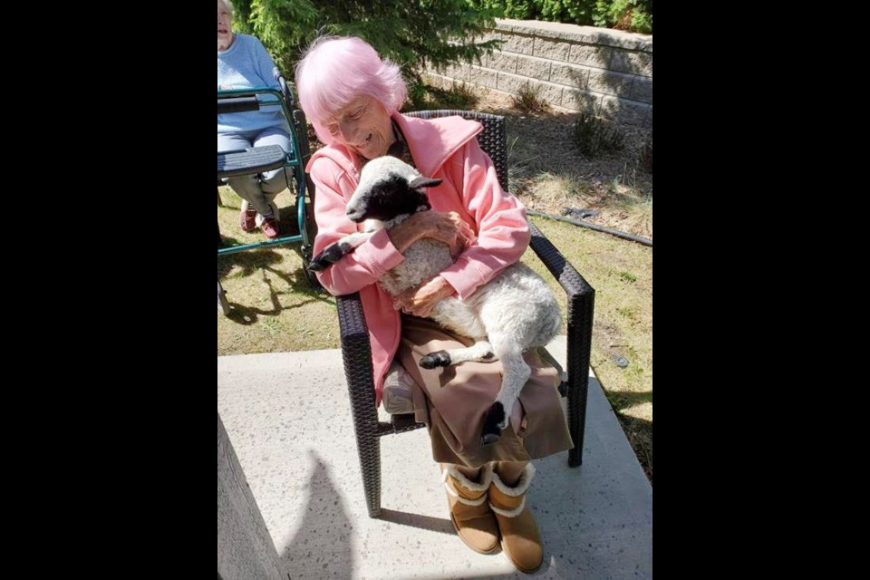 Ridgeview Lodge resident Patricia Crawshay, who turned 100 in March, makes friends with a five-month-old lamb named Bo Peep.
