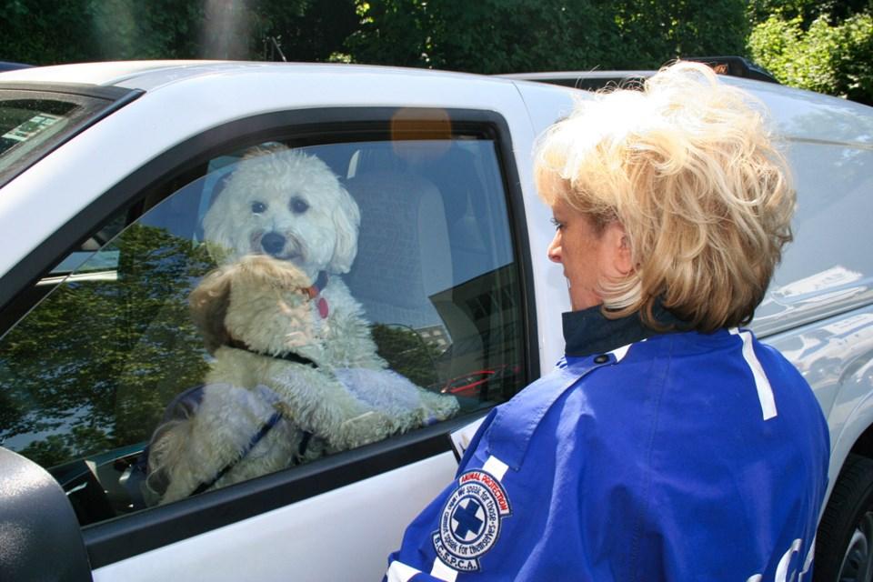 SPCA dog car