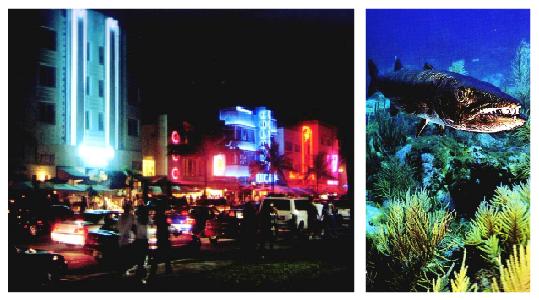 Travel: The wildlife playgrounds of Miami, Florida_0