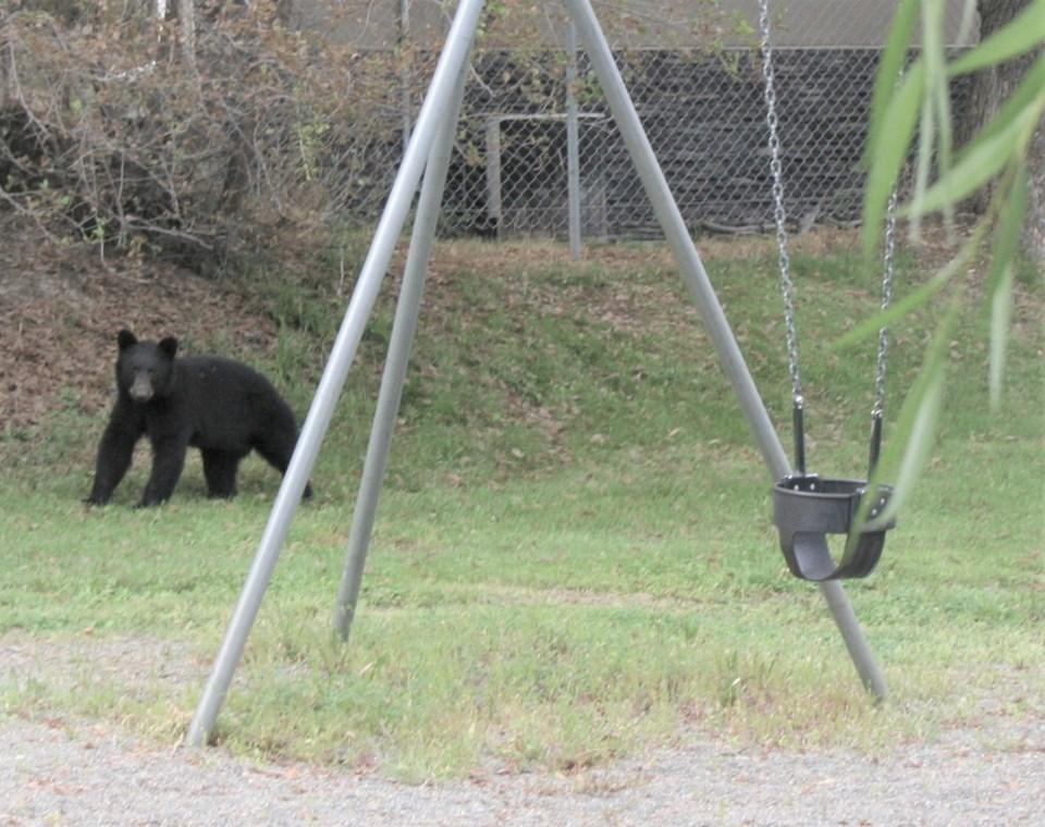 bear in Connaught Park Aug 20 21