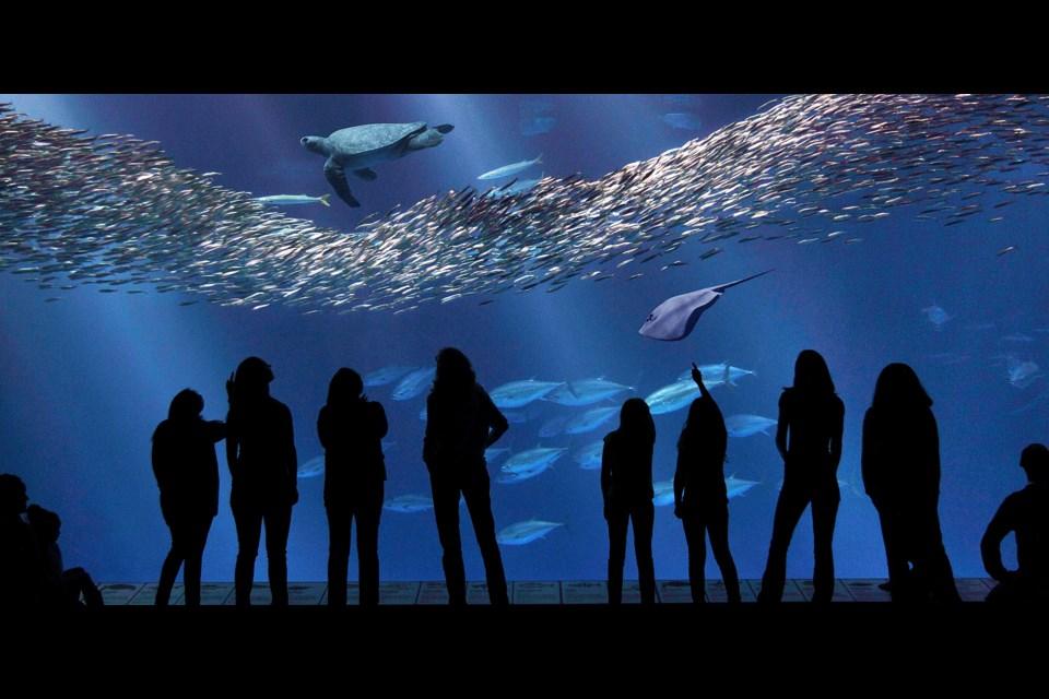 Visitors enjoy the million-gallon Open Sea exhibit at Monterey Bay Aquarium. Photo Monterey Bay Aquarium/Randy Wilder
