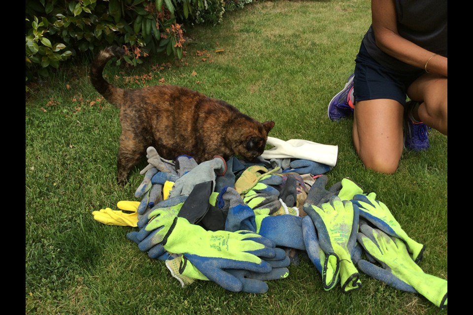 Sienna and her stash: This Burnaby calico has stolen more than 50 gloves in recent months.