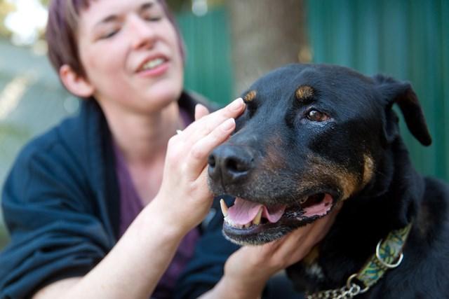 RAPS kennel attendant Andrea Summers tends to Rottweiler cross Maverick's eye infection
