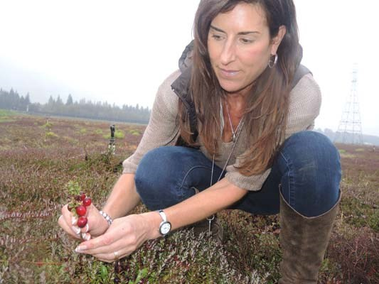 Richberry's executive vice president of operations, Lynn Kemper, inspects this season's cranberry crop out at the east Richmond farm.