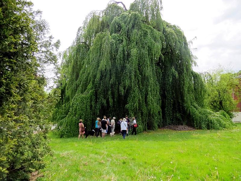 Riverview tree walk