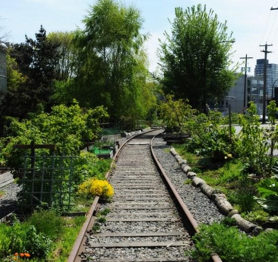 The Arbutus Corridor stretches nine kilometres. Photo Rebecca Blissett.