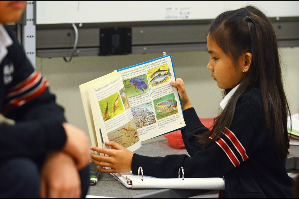 St. Michael's Elementary School Grade 3 student Yeonja Nazareno researches her topic, fish, during Learning in Depth time at her school Wednesday afternoon.